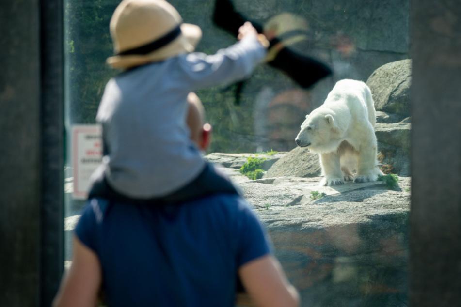 Auch Zoos dürfen wieder geöffnet werden (Symbolfoto).