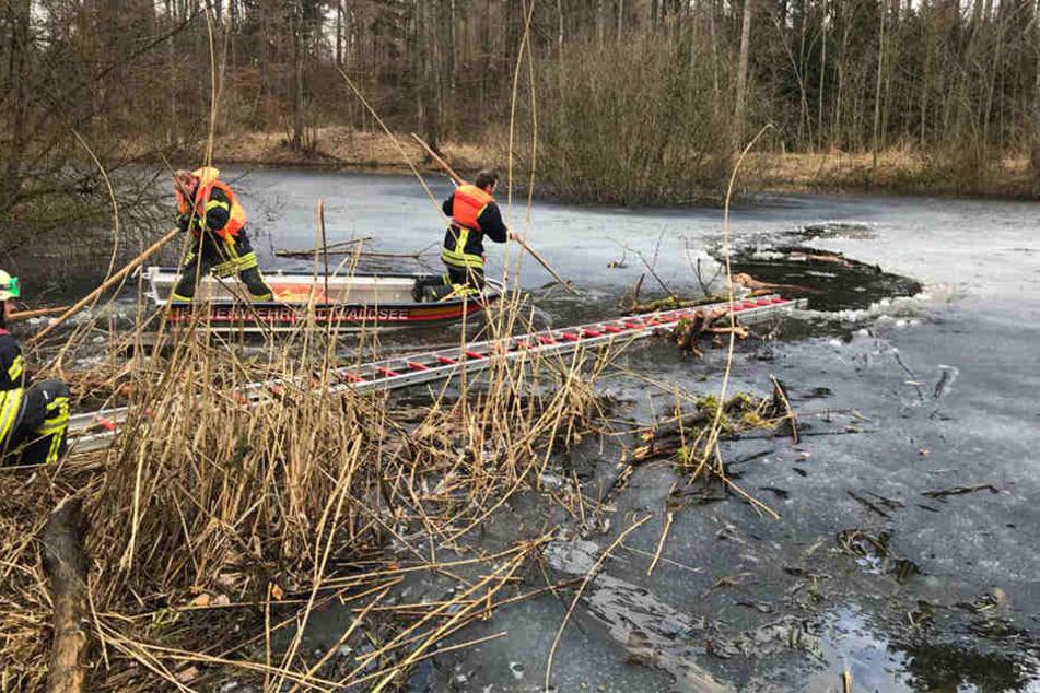 Feuerwehrkräfte retten den ins Eis eingebrochenen Hund.