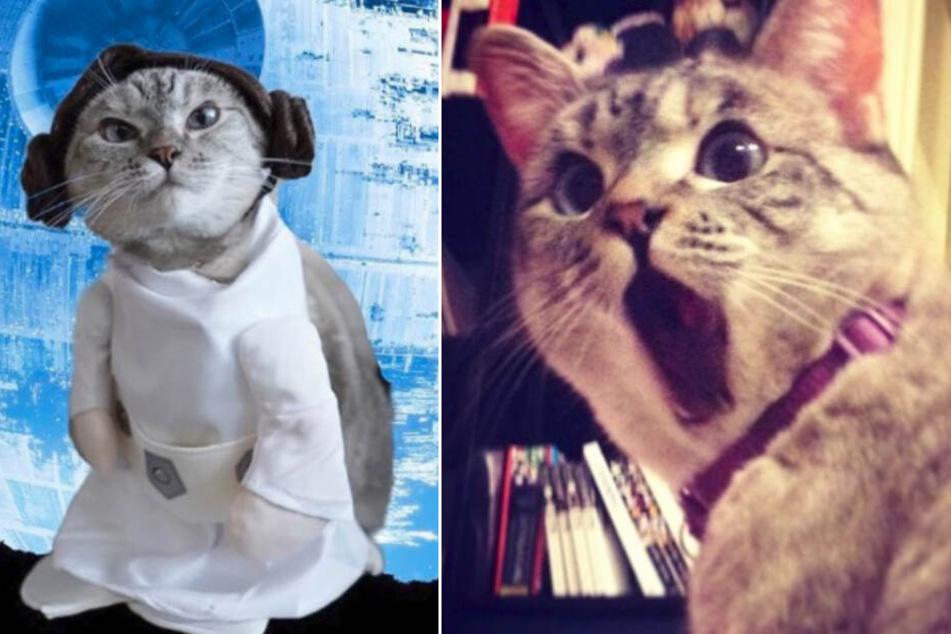 Weltrekord! Katze Nala hat die meisten Follower bei Instagram