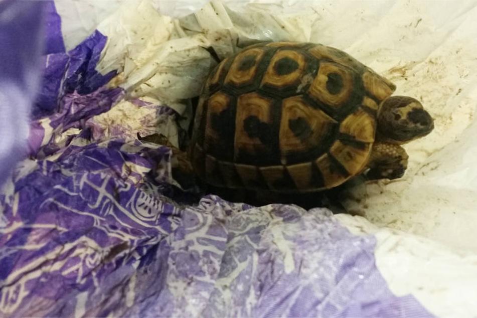 Die Schildkröten wurden von den Beamten aus gefährlichen Plastikhüllen befreit.