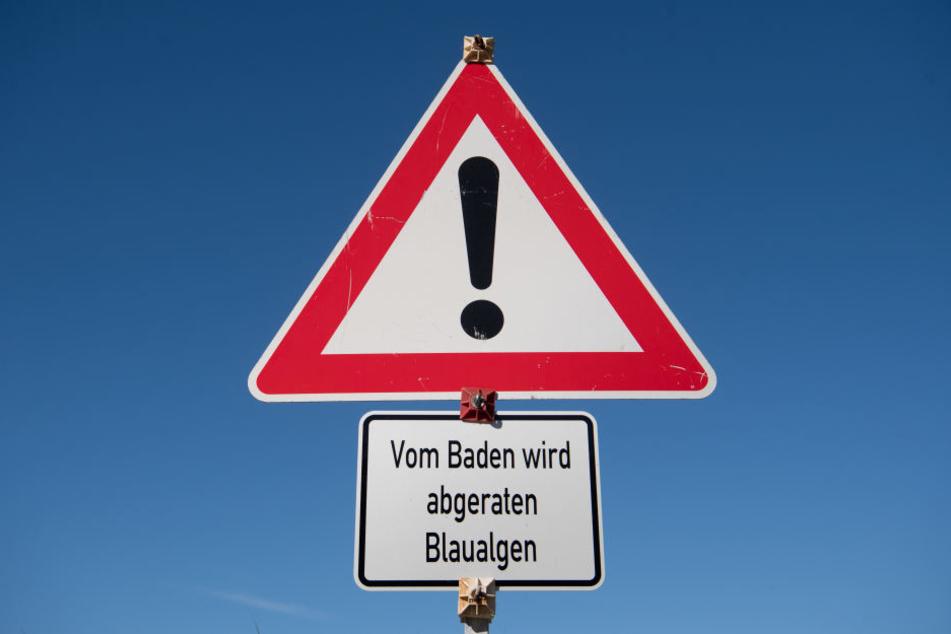 Ein Warnschild warnt vor Blaualgen. (Archivbild.)