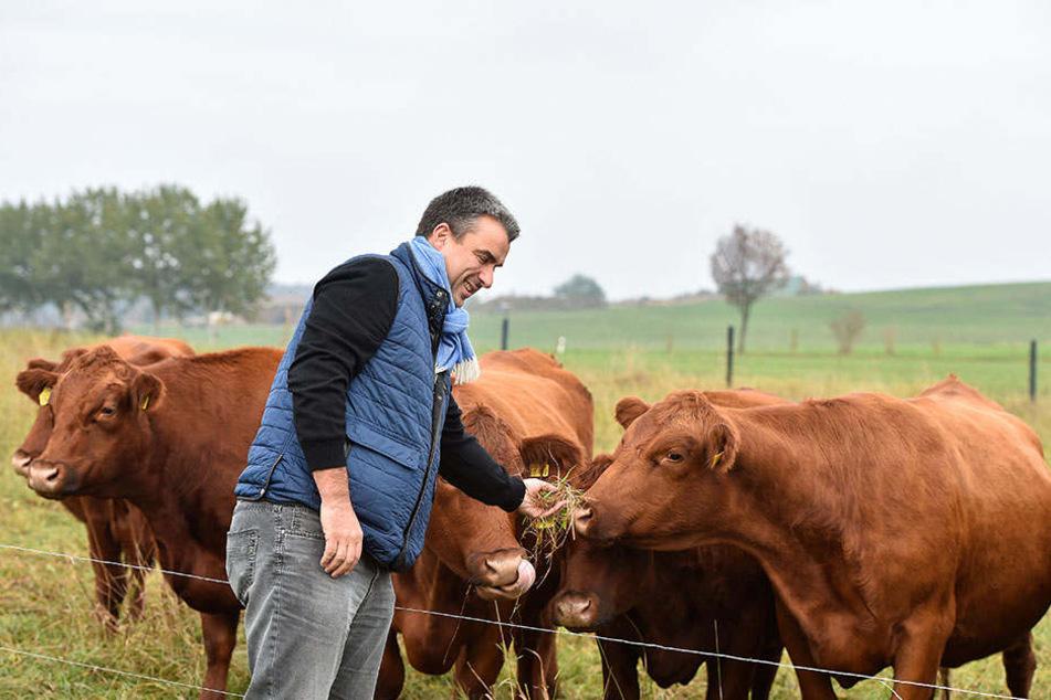 Besuch bei den Damen auf der Wiese: Gerd Kastenmeier (47) schaut nach, das seine Mädels auch gut im Futter stehen.