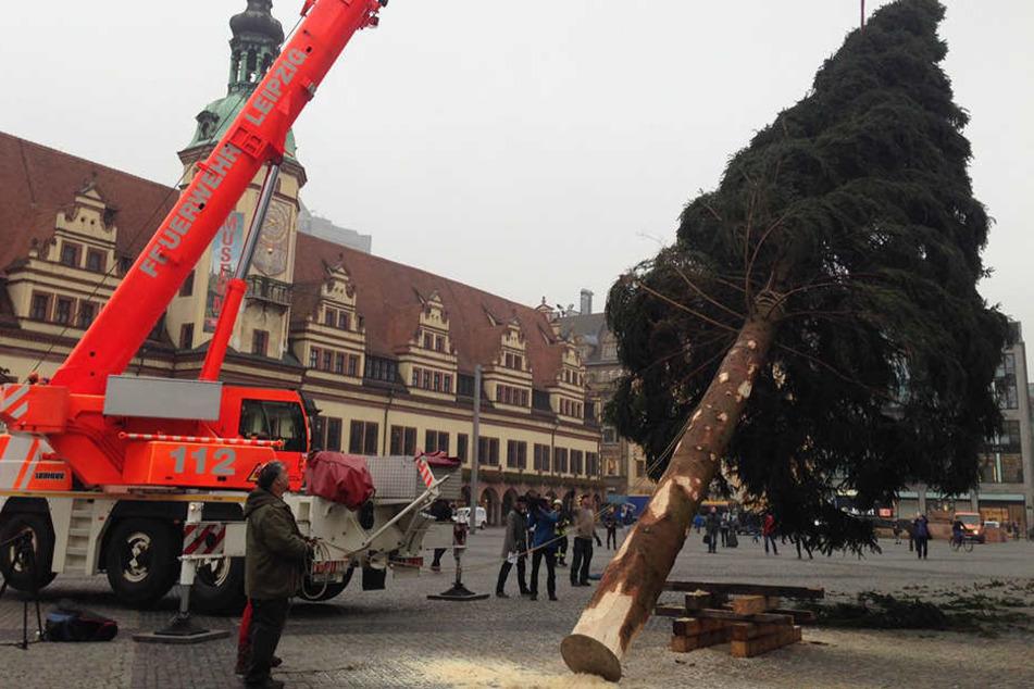 Der Nadelbaum wurde mithilfe eines Kranes der Feuerwehr Leipzig aufgerichtet.
