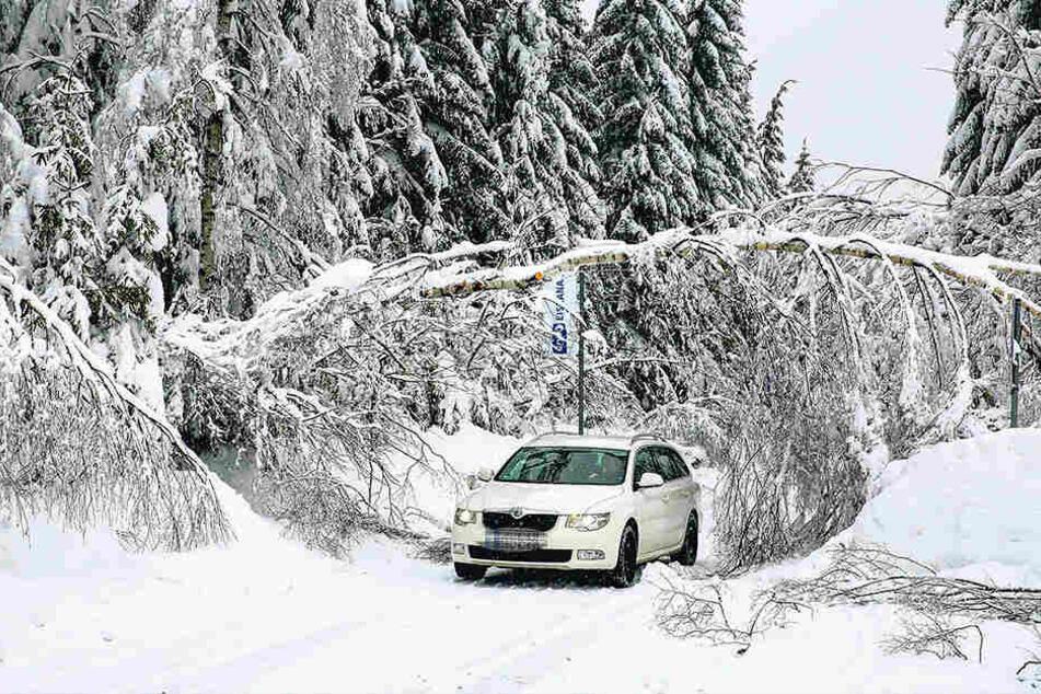 So wie hier nahe der Bobbahn, sind die Wälder rund um Altenberg mit viel Schnee bedeckt. Deswegen besteht akute Schneebruch-Gefahr.