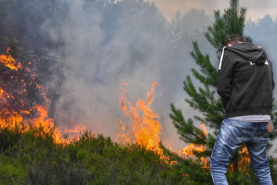 Pinkelpause rettet Brandenburg wohl vor erneuter Waldbrand-Katastrophe