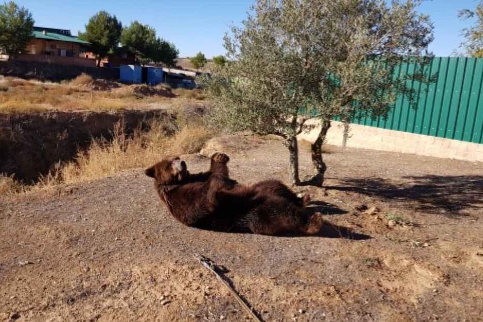 Diese kargen Umstände im Süden Spaniens bilden keinen geeigneten Lebensraum für einen Bären. So sieht es auch das Team des Bärenpark Worbis.
