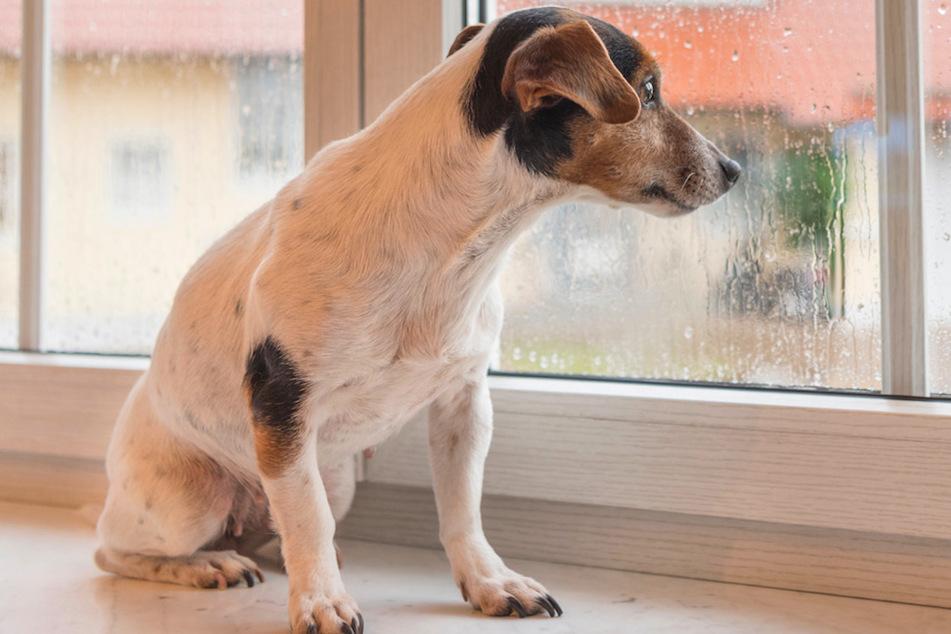 Damit der Hund psychischen Herausforderung gewachsen ist, sollte er auch physisch fit sein.