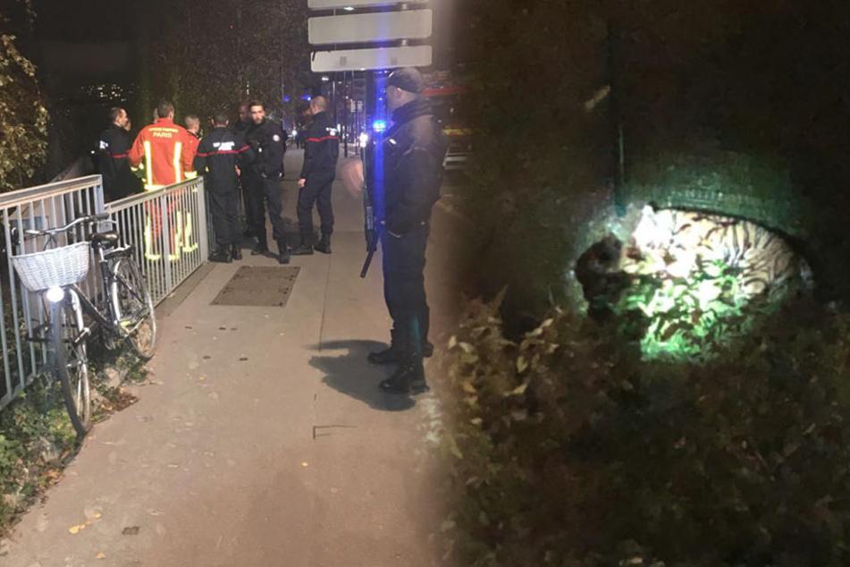 Tiger rennt durch Paris und wird dann erschossen