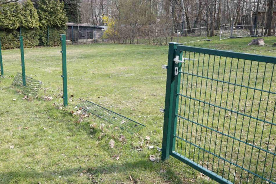 Insgesamt wurden acht Zaunsfelder beim Hundesportverein geklaut.