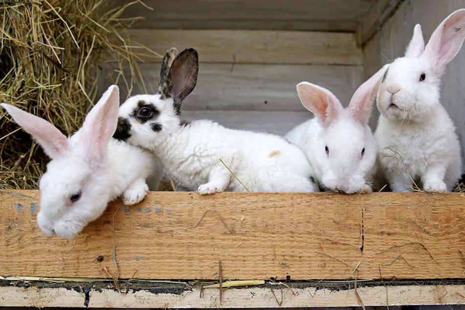 Sachsens beliebte Jungtierschau in Tautenhain muss wegen der Krankheit in diesem Jahr abgesagt werden.