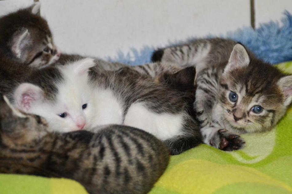 Diese Katzenbabys suchen alle ein neues Heim.