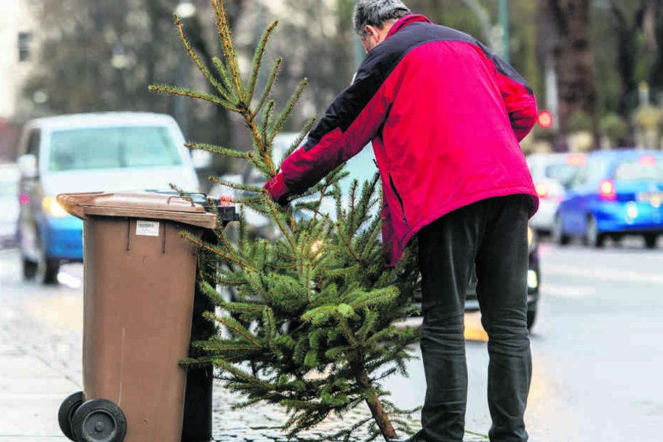 Ausgediente Weihnachtsbäume können neben Biotonnen abgestellt werden.