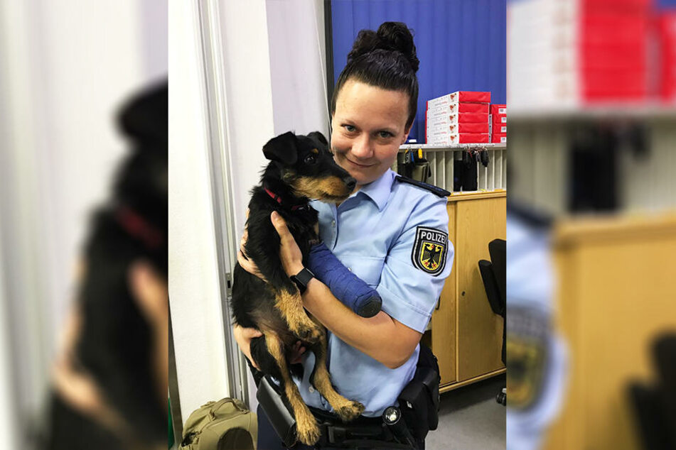 Die niedliche Hundedame brauchte nicht lange, um die Polizisten um den Finger zu wickeln.