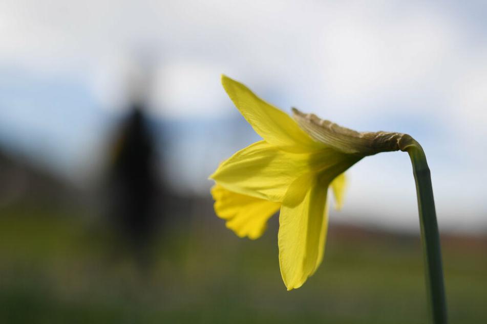 Frühlingshafter wird es wohl erst ab Mitte März.