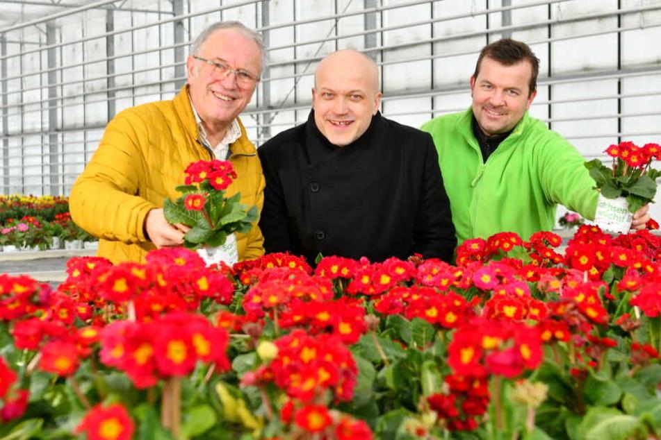 """Lassen Dresden aufblühen: Pflanzenkoordinator Wolfgang Friebe (68, v.l.), Geschäftsführer Tobias Muschalek (43) und """"Gartenbau Rücker""""-Chef Thomas Schön (34)."""