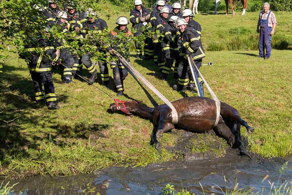 Feuerwehrleute bereiten die Rettung eines Pferdes aus einem Wassergraben vor.