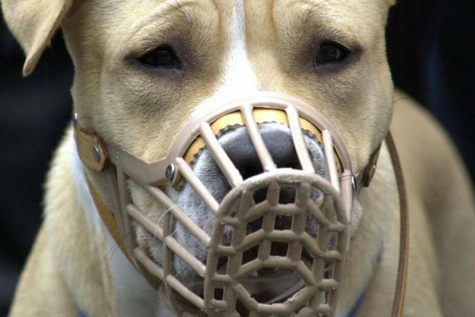 Ein Hund zerfleischte das Gesicht von Molly Beresford (5). (Symbolbild)
