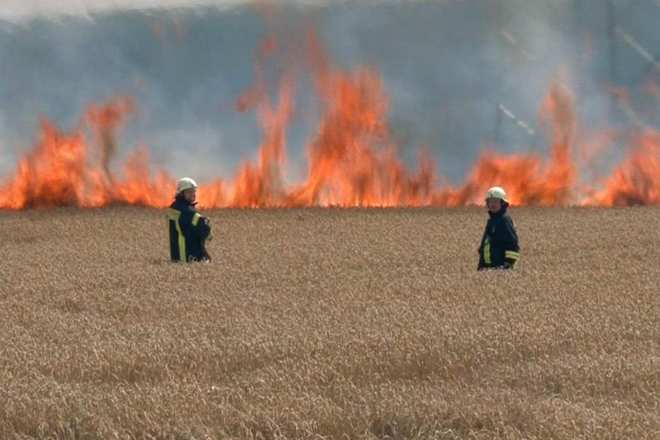Am Sonntagmittag brannte ein Getreidefeld bei Eisleben lichterloh.