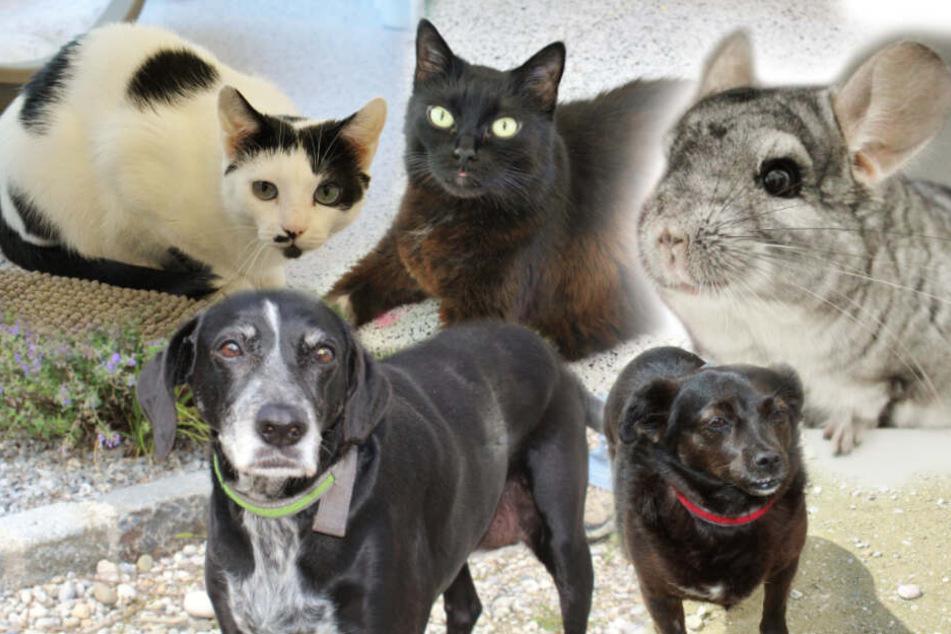 5 besondere Tiere, die ihr Zuhause verloren haben: Warum sitzen sie noch im Tierheim?