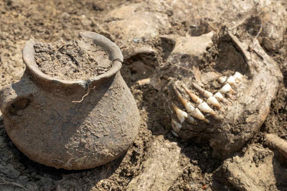 Die Skelette sind teilweise noch sehr gut erhalten.