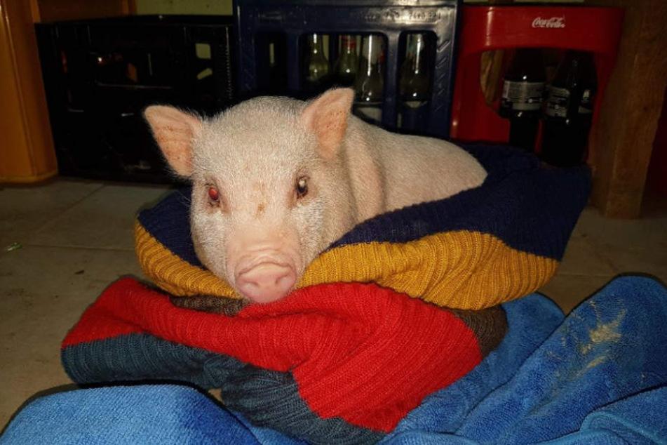 Was mit Bifi passiert, wenn das Minischwein wieder gesund ist, ist noch unklar.