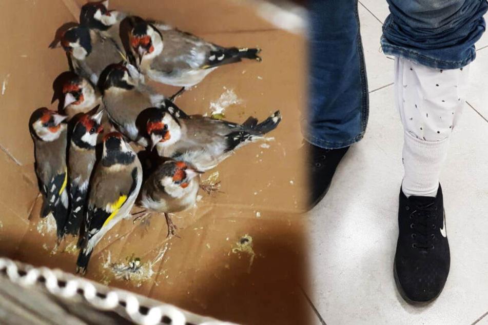 Typ will 14 Vögel in seiner Hose in anderes Land schmuggeln