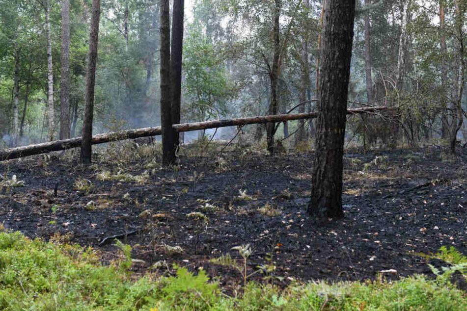 Gelöschte Brandstellen sind im Wald zu sehen.
