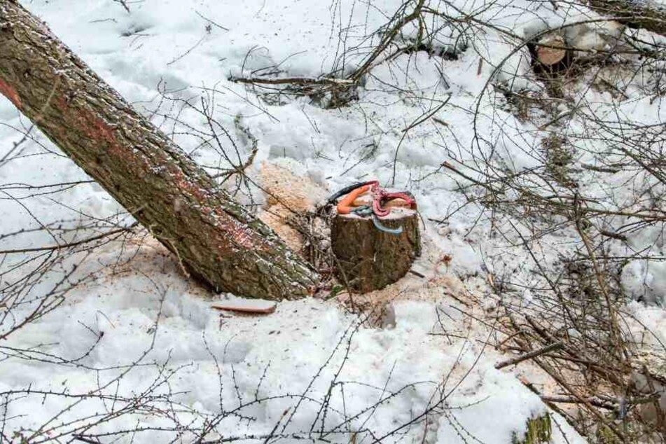 Der Forstarbeiter wurde bei Fällarbeiten verletzt.
