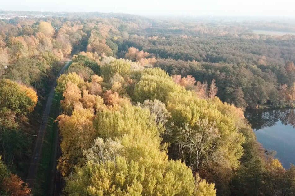 Die Boberger Niederung gilt als eines der schönsten Naturschutzgebiete Hamburgs.