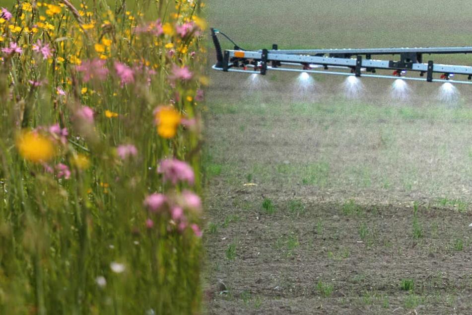 Geht die Bürger nichts an? Naturschutzbund verklagt das Land wegen Pestiziden