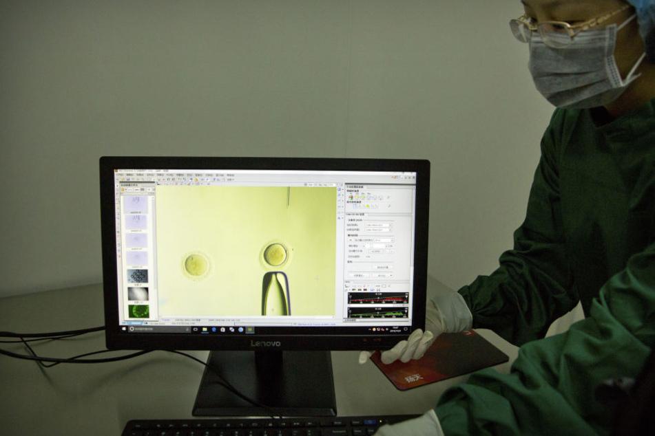 In einem Video dokumentierten die Forscher ihre Fortschritte.