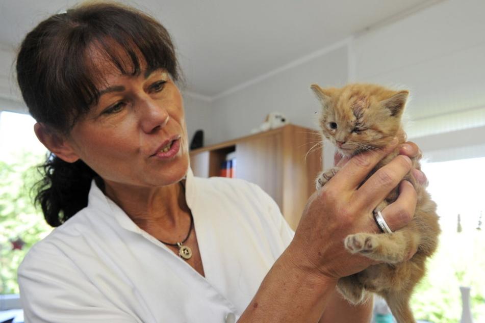 Dem kleinen Stubentiger wurde der Schädel eingeschlagen, dank der Hilfe von Tierärztin Annegret Breinrucker (51) geht es ihm aber schon wieder besser.