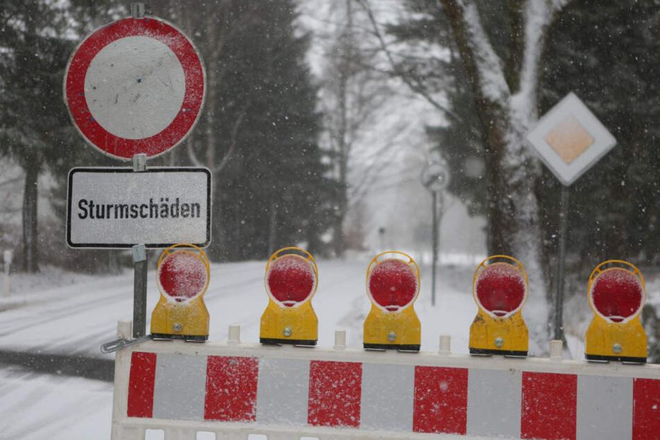 """Umgestürzte Bäume sorgen auch nach dem Sturmtief """"Sabine"""" im Harz für Verkehrseinschränkungen auf den Straßen."""