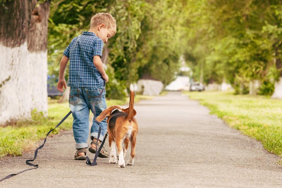Der Junge war alleine mit seinem Hund unterwegs. (Symbolbild)