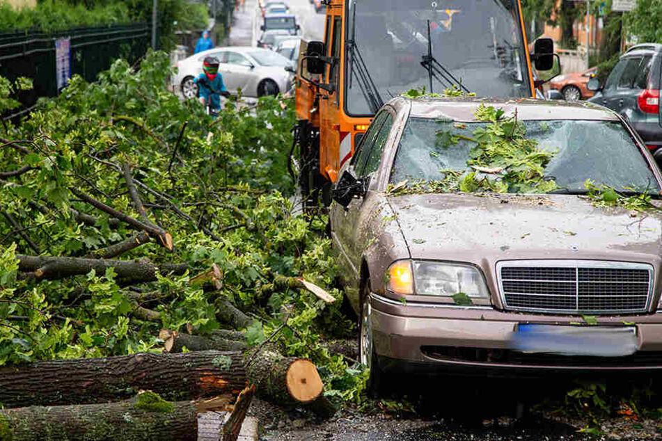 In Meiningen wurde ein Mercedes durch einen Baum schwer beschädigt.