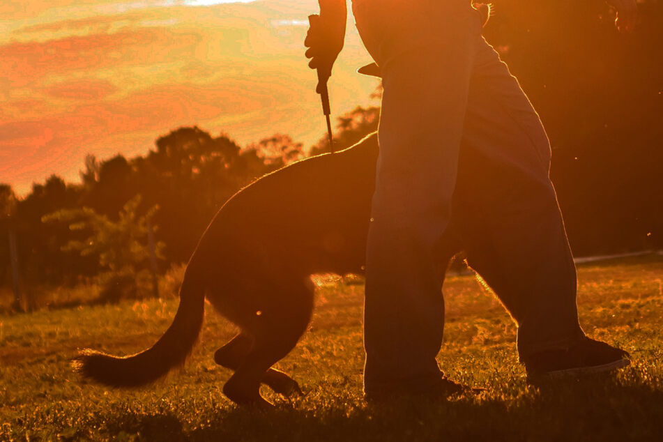 Hund jault während Spaziergang plötzlich laut auf: Angeschossen!
