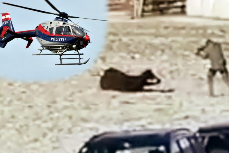 Hubschrauber-Einsatz: Polizei schießt sieben Mal auf Kuh!