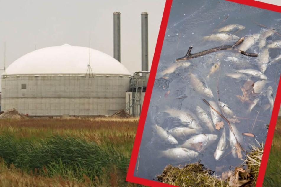 Alle Fische sind tot! Gülle verunreinigt Flüsse