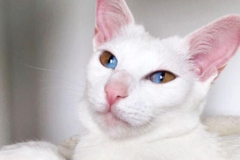 Diese Augen einer Katze sind etwas ganz Besonderes!