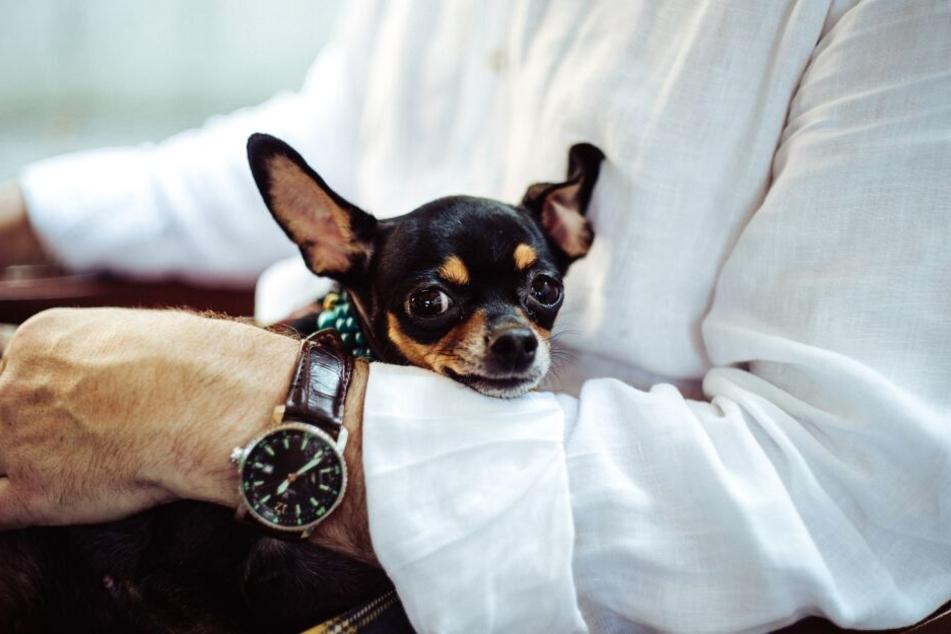 Jeder Hund ist anders, dennoch ist ein rücksichtsvoller Umgang mit jedem Vierbeiner Pflicht.