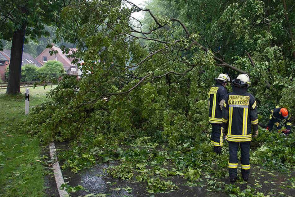 In Niedersachsen musste die Feuerwehr Bäume beseitigen.