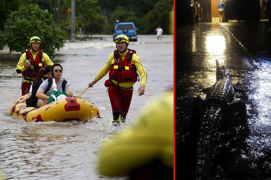 Jahrhundertflut spült Anwohnern Krokodile vor die Häuser