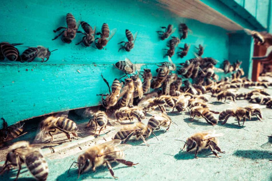 Ganze Straße gesperrt, weil sie von afrikanischen Killerbienen heimgesucht wird