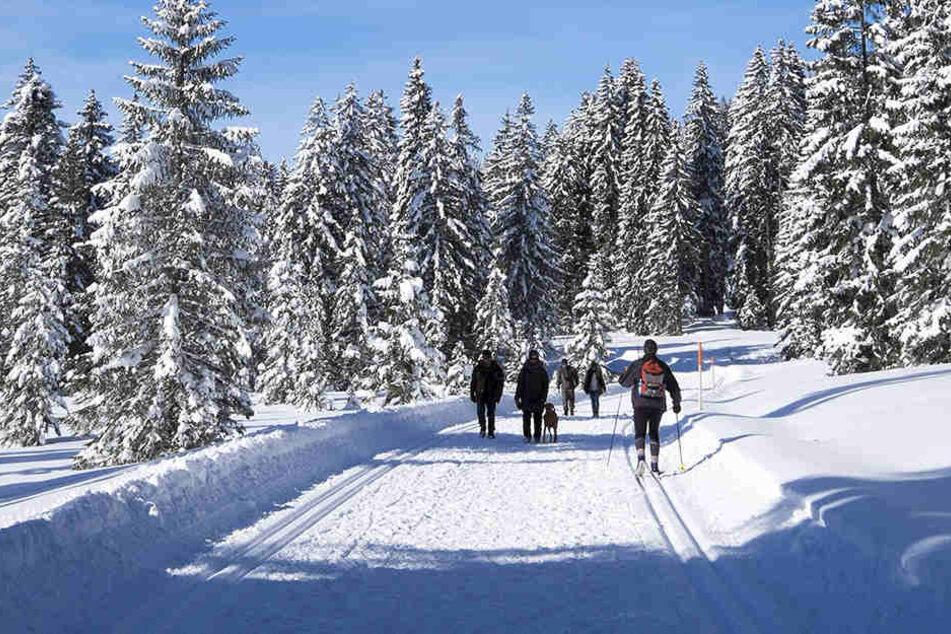 Der Skifahrer war in der Loipe mit gesundheitlichen Problemen zusammengebrochen.