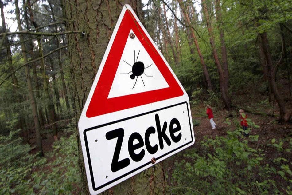 Mit den steigenden Temperaturen werden auch die Zecken wieder aktiv. In Sachsen-Anhalt ist die Zahl der Borreliose-Infektionen rasant gestiegen.