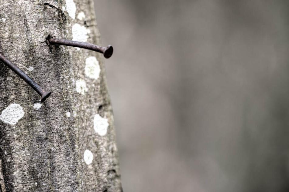 Bei dem Spiel ging es darum, Nägel in einen Baum zu schlagen. (Symbolbild)