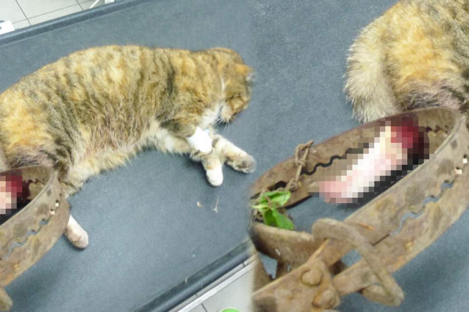 Töten diese grausamen Fallen Haustiere? Peta fordert Verbot der Jagdmethode