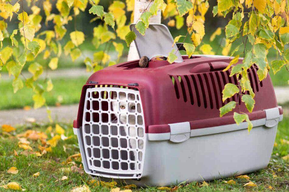 Die Katze war in einer Transportbox im Wald ausgesetzt worden (Symbolbild).