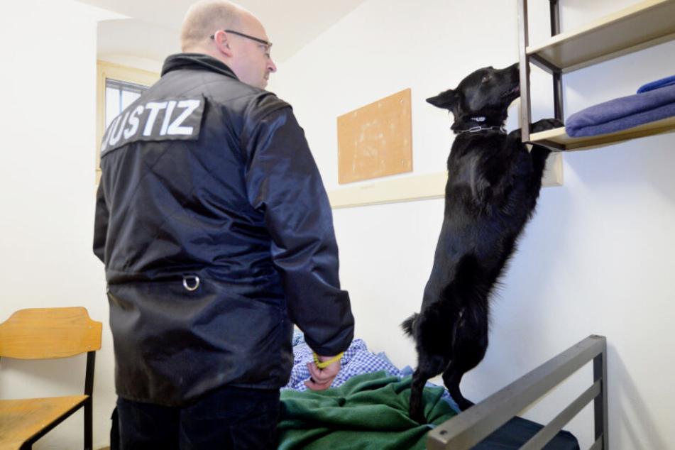 Ein Justizbeamter durchsucht mit einem Drogen-Spürhund eine Gefängniszelle.
