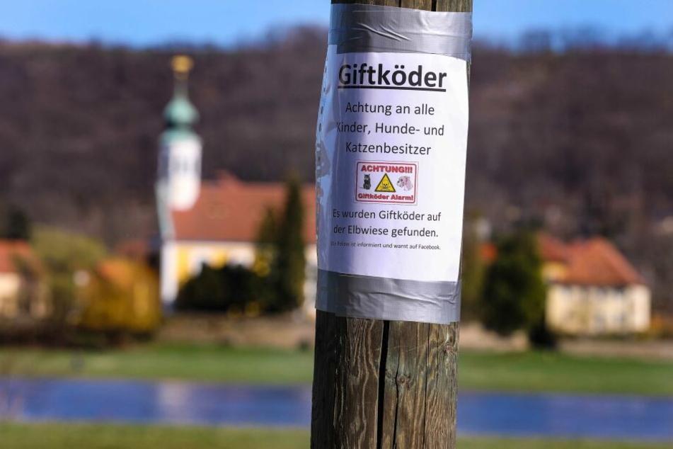 Am Zschachwitzer Elbufer warnt jetzt ein Schild vor den Giftködern.